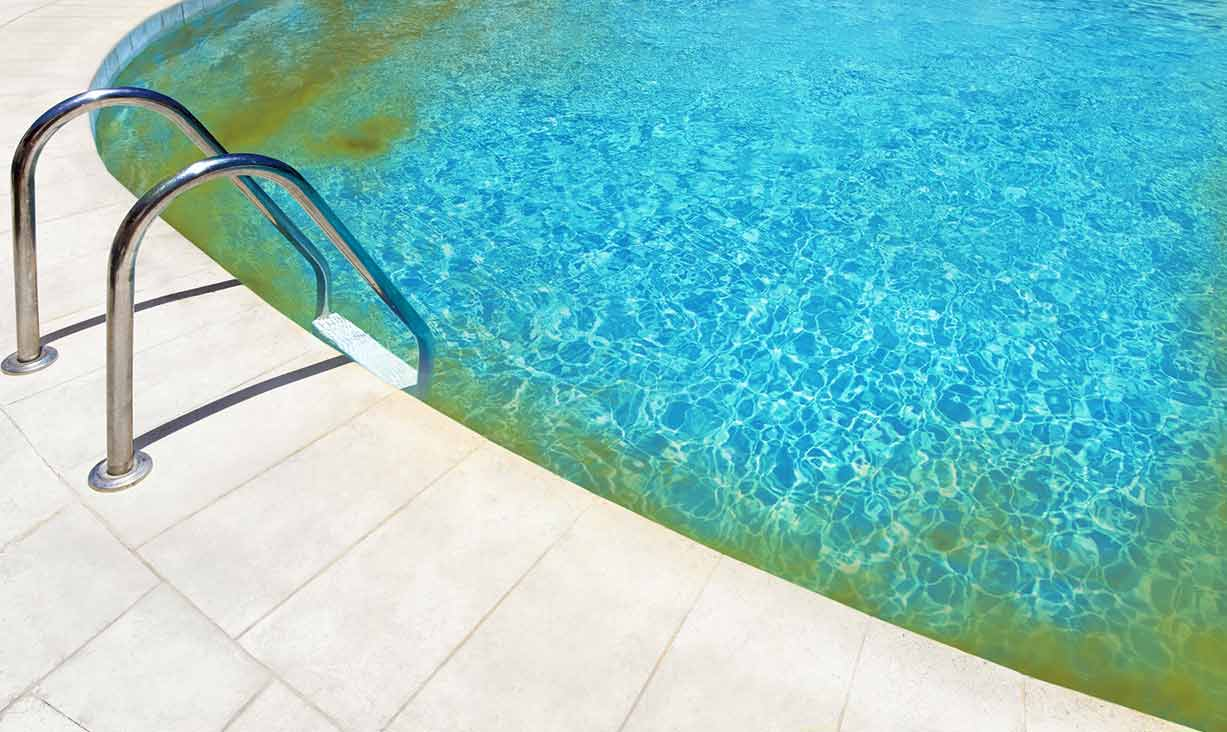 Image Result For Cleaning Algae From Pool